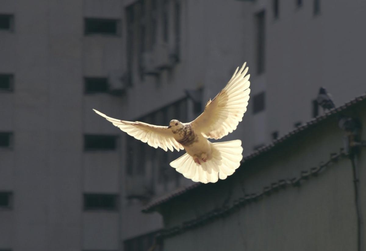 The Holy Spirit of Jesus